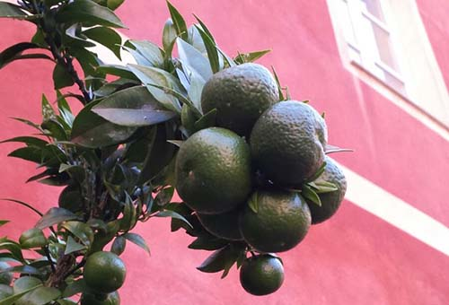 Chinotto Green