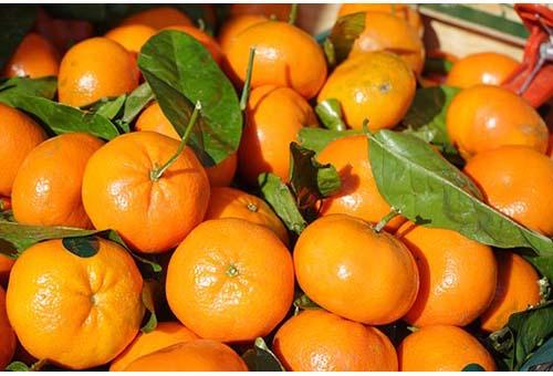 Mandarin-Mandarino